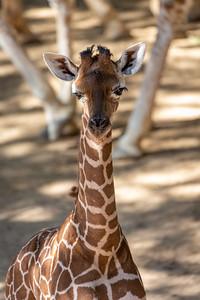 Baby Tana