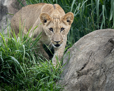 Stealthly Cub