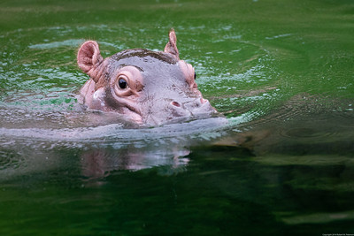 Adanna Swimming