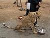 Cheetah Run San Diego-47-Edit