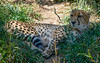 2015 Denver Zoo 005