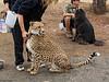 Cheetah Run San Diego-34-Edit
