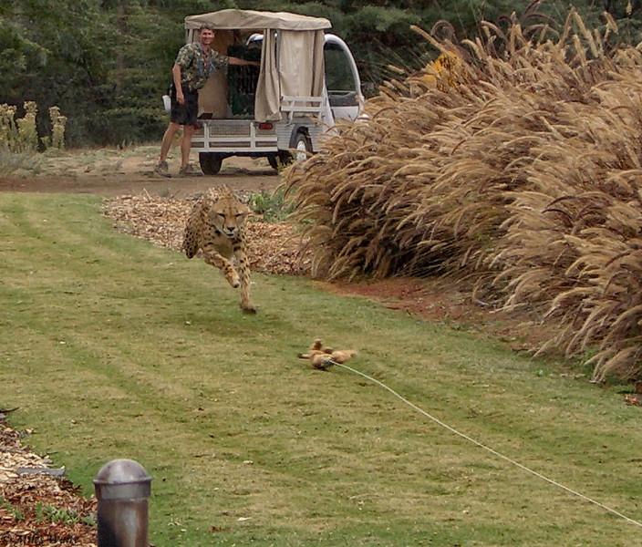 Cheetah Run San Diego-18-Edit-2