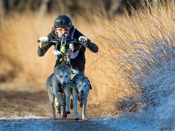 Pampa sled dog race.