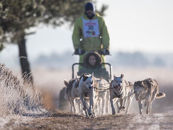 Pampa sled dog race.