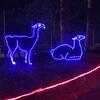 llamas (I think)