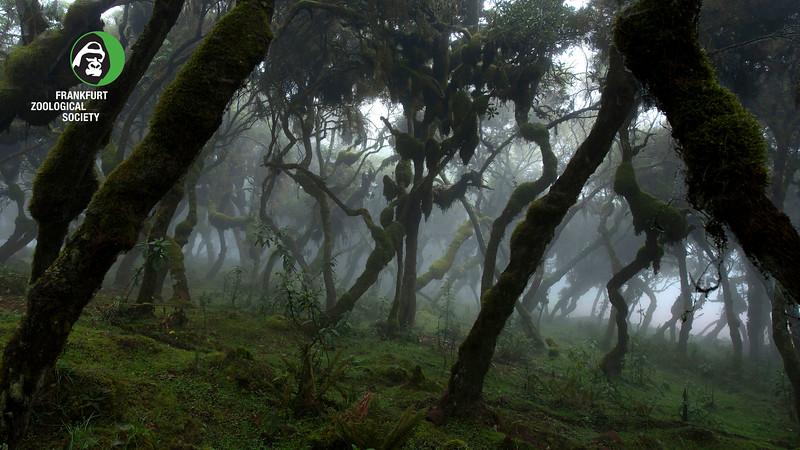 Bale Harenna Forest