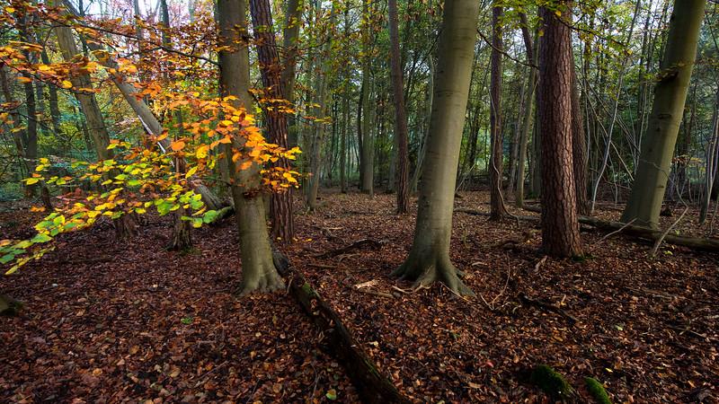 A forest in Dieburg, Hessen, Germany. © Daniel Rosengren