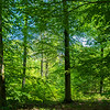A forest south of Messel, in Hessen, Germany. © Daniel Rosengren