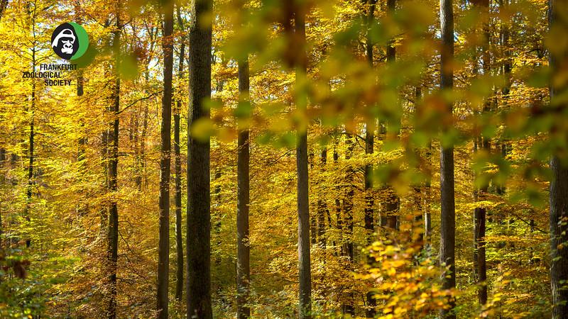 A Beech and Oak forest in Alsberg, Hessen, Germany. © Daniel Rosengren