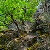 Oak trees growing on porous rocks in the Wispertaunus, Hessen, Germany. © Daniel Rosengren