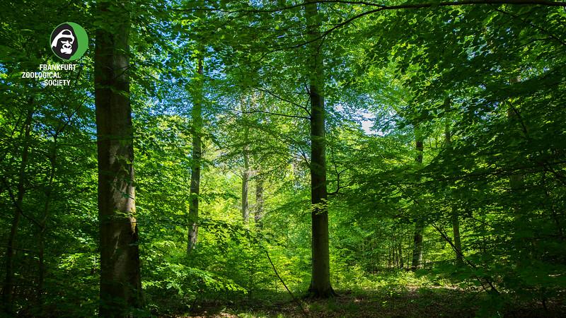 A forest south of Messel, in Hessen, Germany. © Daniel Rosengren