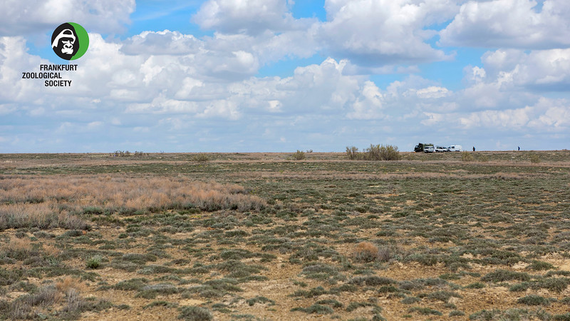The FZS and ACBK team taking a lunch break on the steppe in the Altyn Dala reserve, Kazakhstan. © Daniel Rosengren