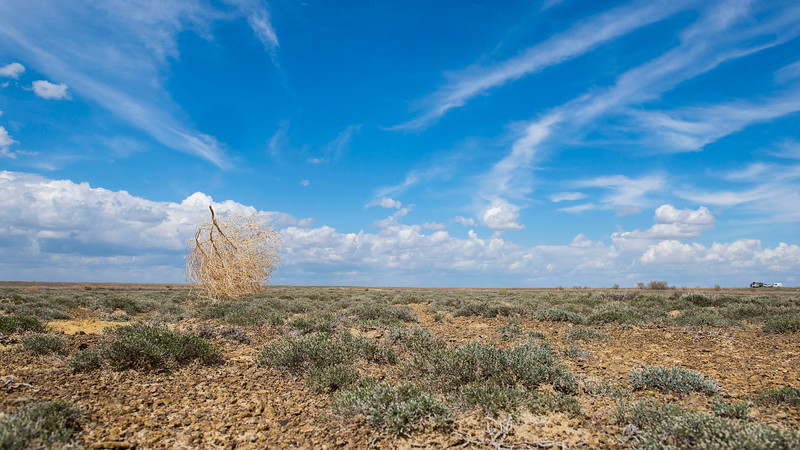 A Tumbleweed rolling across the steppe and spreading its seeds. Kazakhstan. © Daniel Rosengren