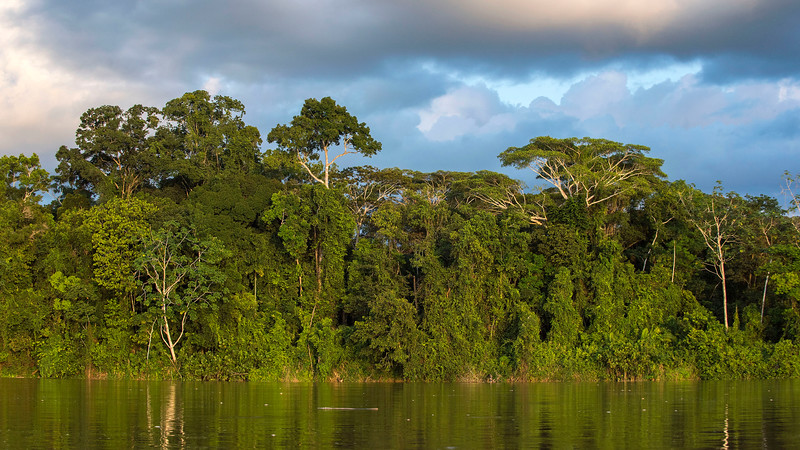 The rainforest along the river Putumayo on the way to Yaguas, Peru. © Daniel Rosengren