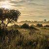 The Pampas del Heath, Peru, Bahuaja Sonene NP. © Daniel Rosengren