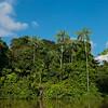 The rainforest along the River Yaguas, Peru. © Daniel Rosengren