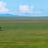The grass plains of Serengeti NP and a single Sausage Tree. Tanzania. © Daniel Rosengren