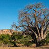A Baobab tree in front of the Chilojo Cliffs. Gonarezhou NP, Zimbabwe. © Daniel Rosengren