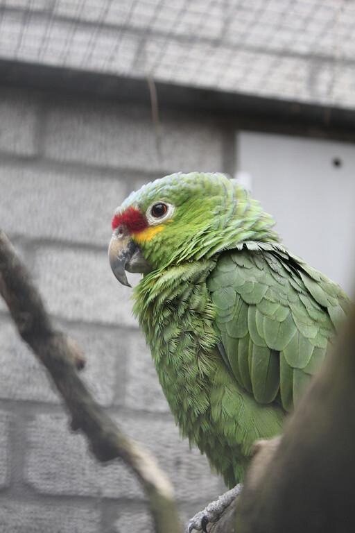 NOP Veldhoven - Papagaaienpark