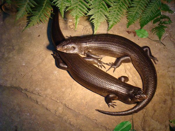 Currumbin Wildlife Sanctuary, QLD, Australie