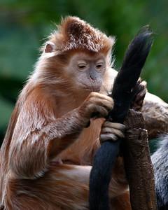 Bronx Zoo.
