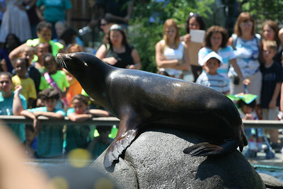 The Central Park Zoo, New York, NY.
