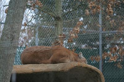 Wildlife & Ecology Center, Holtsville, NY.