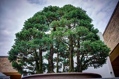 A world of bonsai