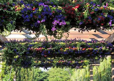 Flowers of the Bridge