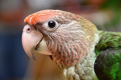 Omar's Exotic Birds, Lake Forest, CA