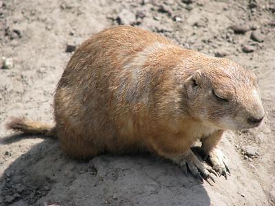 Állatkert és Városliget (2008.05.12.)