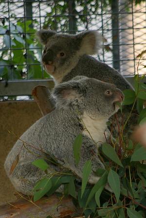 11.4.07 SD Zoo