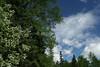 clouds7065