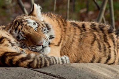 Let sleeping tigers lie