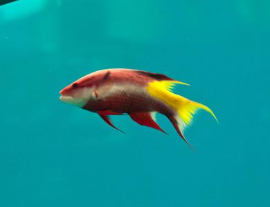 Aquarium June 2011
