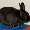 bunny_8392