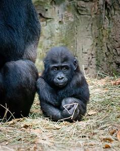 2015 Bronx Zoo November