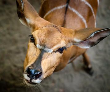 2015 Bronx Zoo Sept