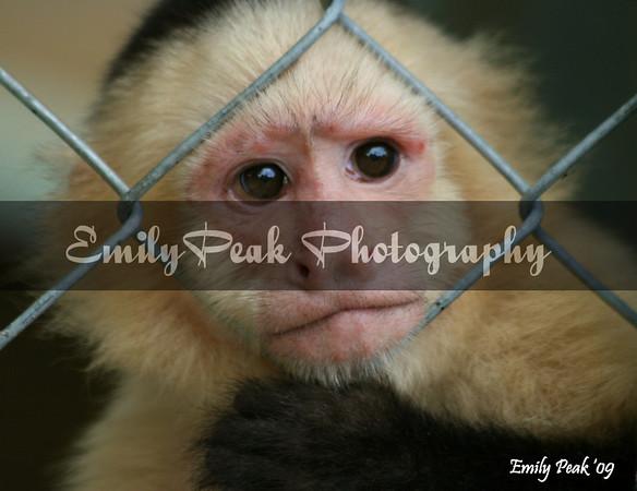 ALGulfCoast Zoo (2)