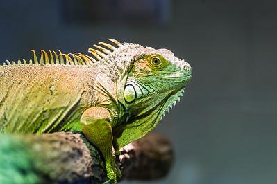 Akron Zoo 4-16-16