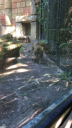 Alexandria Zoo 04-04-2017
