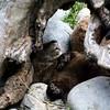 Sleeping River Otter - The Alaska Zoo