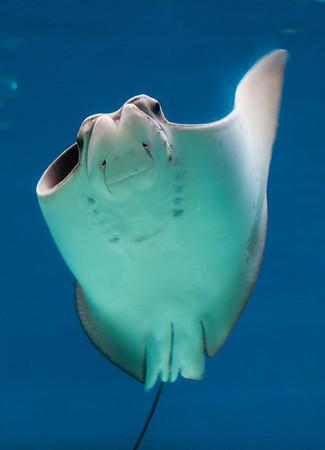Aquarium April 2012