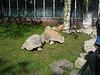 IMG_4398.JPG — artis zoo amsterdam
