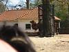 IMG_4379.JPG — artis zoo amsterdam