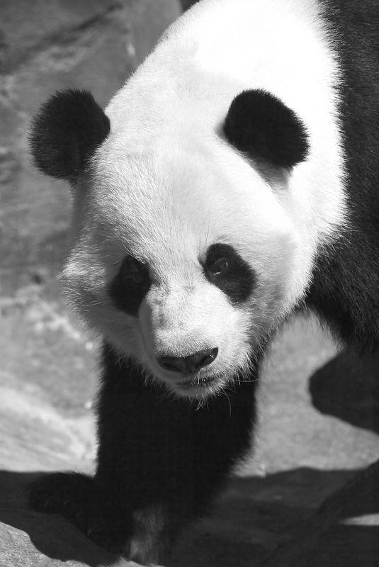 Atlanta Zoo - Spring 2003 <br>Copyright 2003 Adam Brown