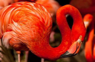 Flamingos_3419