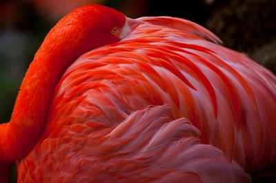 Flamingo_3425