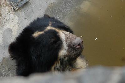 Banos Zoo